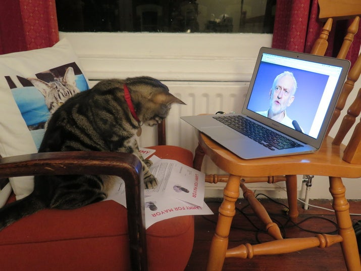 When it came to voting, Ned had several options: Andy Purr-nham, Yvette Coo-paw, and Mew Labour candidate Liz Kat-ndall were all in contention.