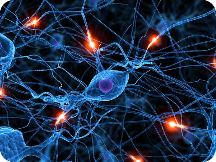 1) Nerve impulses travel to and from the brain at speeds of up to 250 miles per hour, faster than a Formula 1 racecar, a Peregine Falcon, and the world's fastest rollercoaster; Formula Rossa.