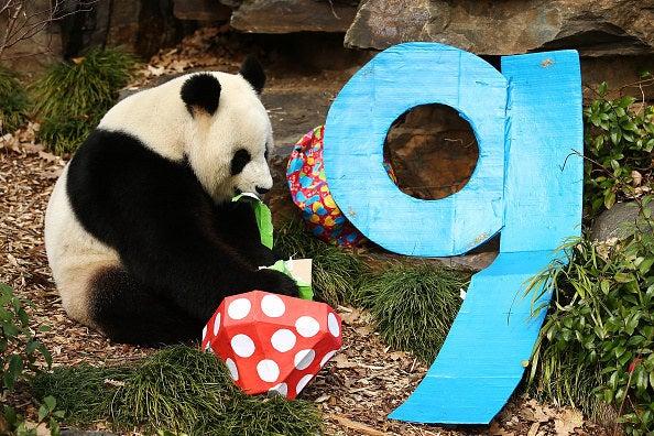 Alguém quer bolos para pandas?