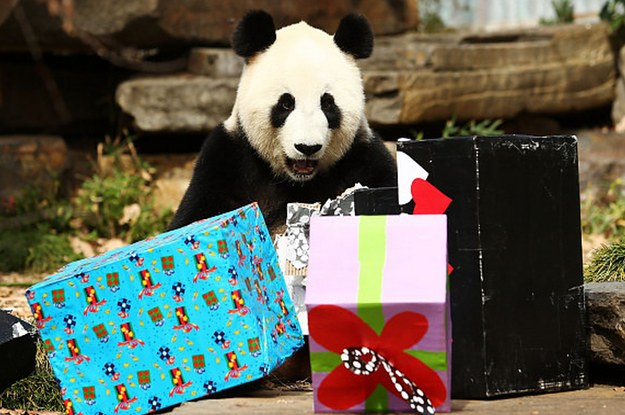 This Super Cute Panda Was Thrown A Birthday Party And It's Adorable