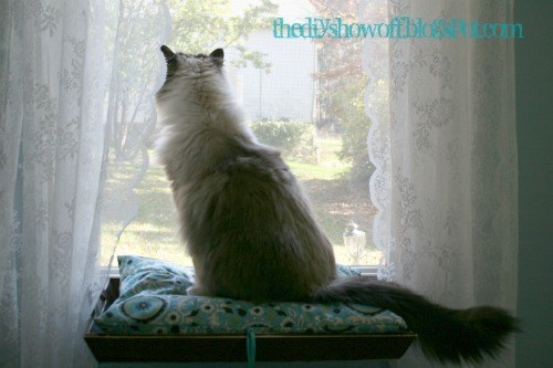 Make a window perch for your cat to see what's going on outside.