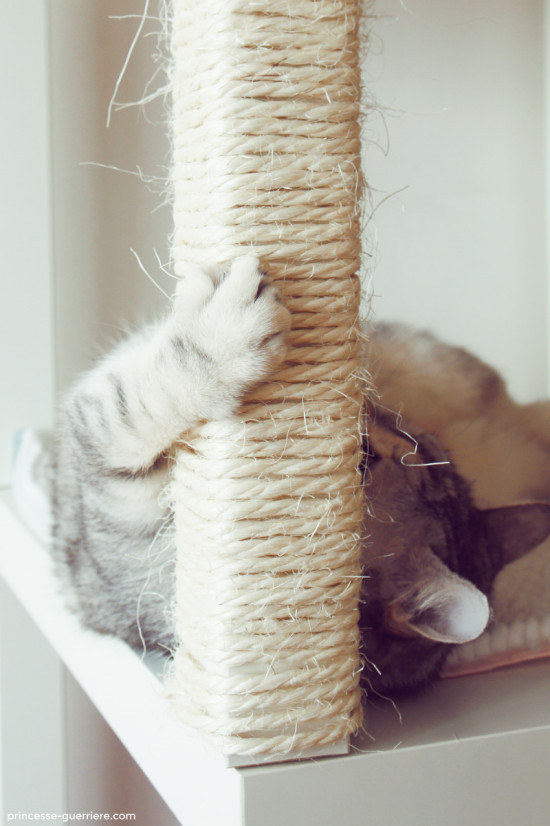 Wrap thin rope around the legs of end tables to create scratching posts.