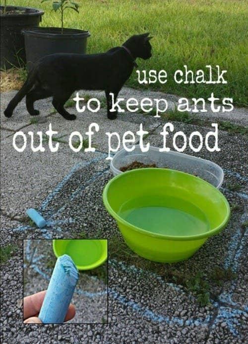 Ants don't walk across chalk!