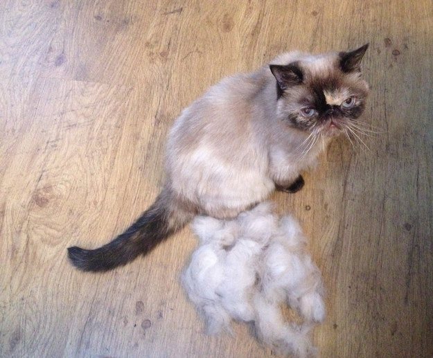 Spend a few extra moments in the morning or evening brushing down your cat, and you'll have less fur on all your furniture!