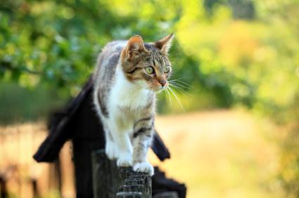 best way to stop cats coming in my garden