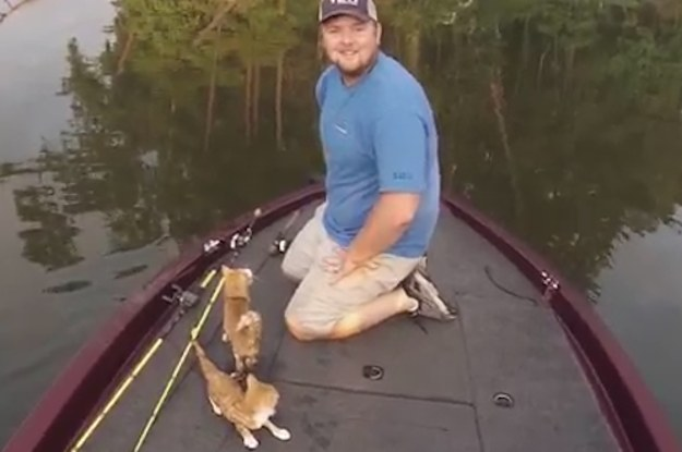 Two desperate kittens swam out to some fishermen in alabama for People catching fish