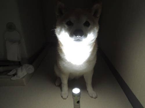 13 Spooky Dog Ghost Stories From This Cute Shiba