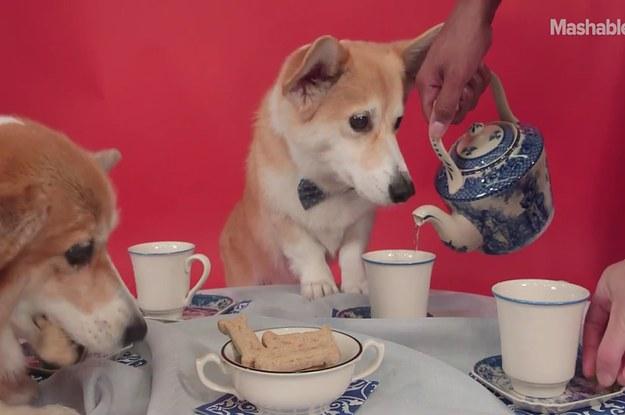 A Bunch Of Corgis Had A Tea Party To Celebrate The Queen S