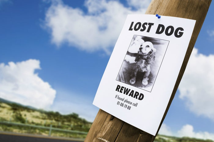 Seriously though, how depressing is putting up lost cat or lost dog signs. It's the bane of our existence.