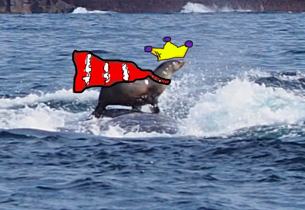Uma mulher fotografou uma foca montando uma baleia e é espetacular