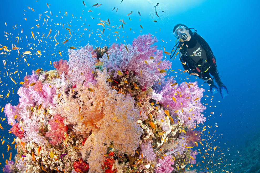 All in all, the Red Sea is home to over 1,000 species of fish and 150 different coral.
