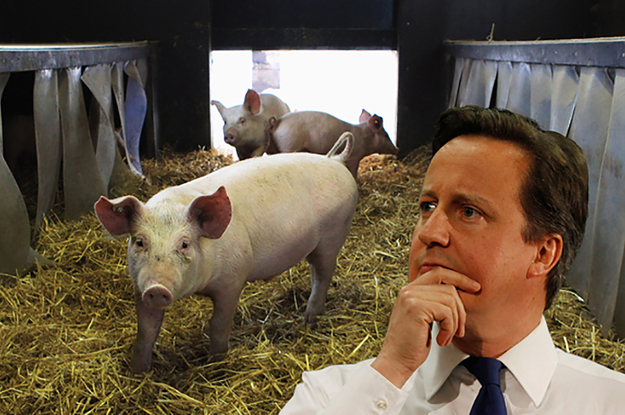 The Funniest Responses To That Story About David Cameron And