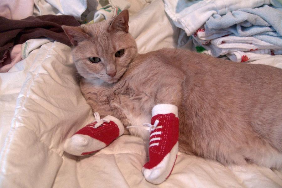 Фото кот в носках
