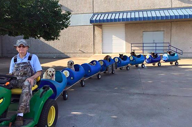 A Man Has Built A Train For All His Adopted Stray Dogs