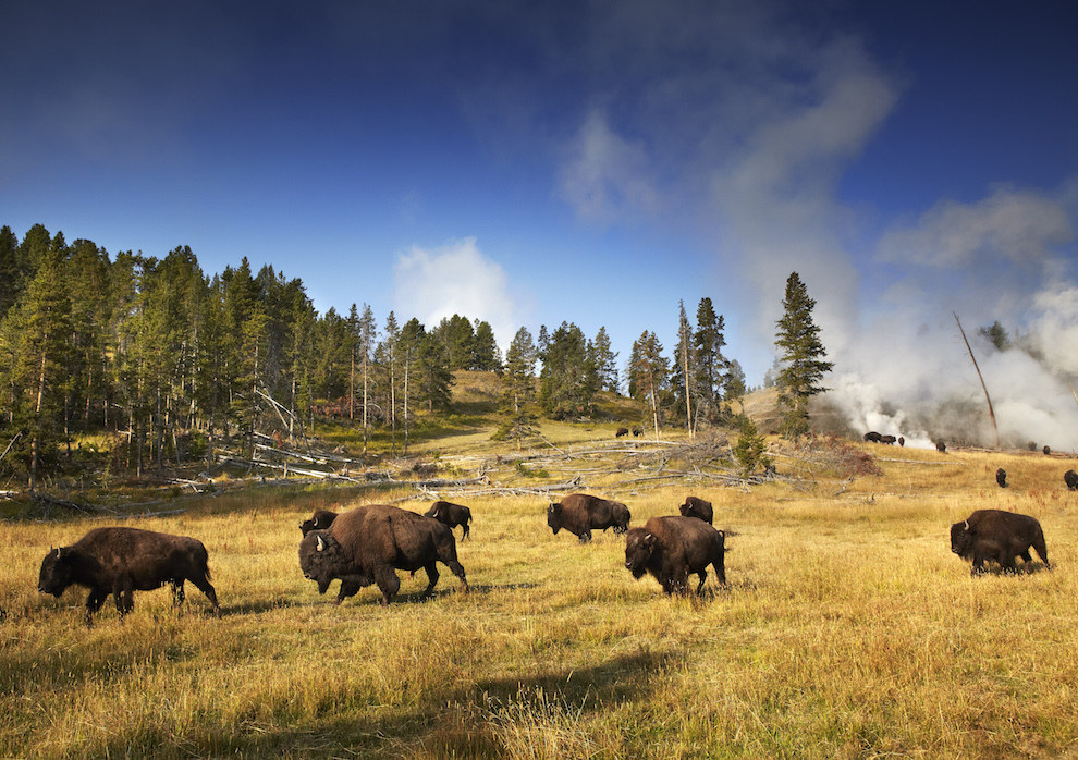Yellowstone National Park (Idaho, Montana, and Wyoming)