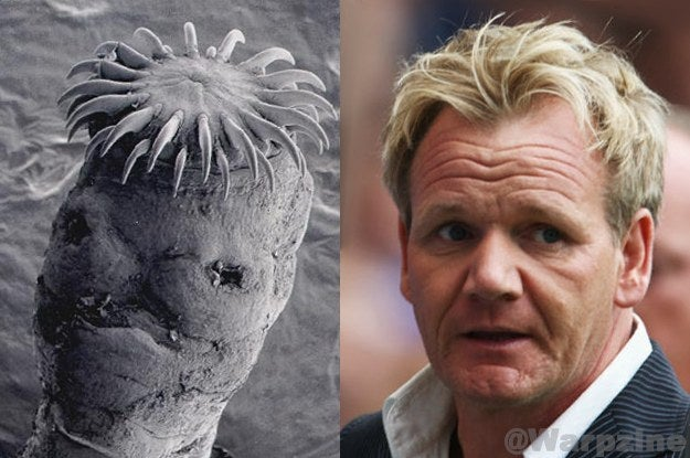 You certainly don't want to associate any chef with tapeworms, but I think you'll agree these two were definitely separated at birth.