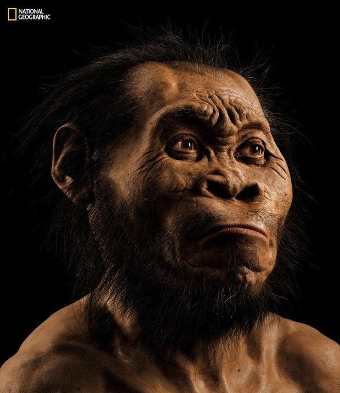 Uma reconstrução da cabeça do Homo naledi pelo paleontólogo John Gurche.
