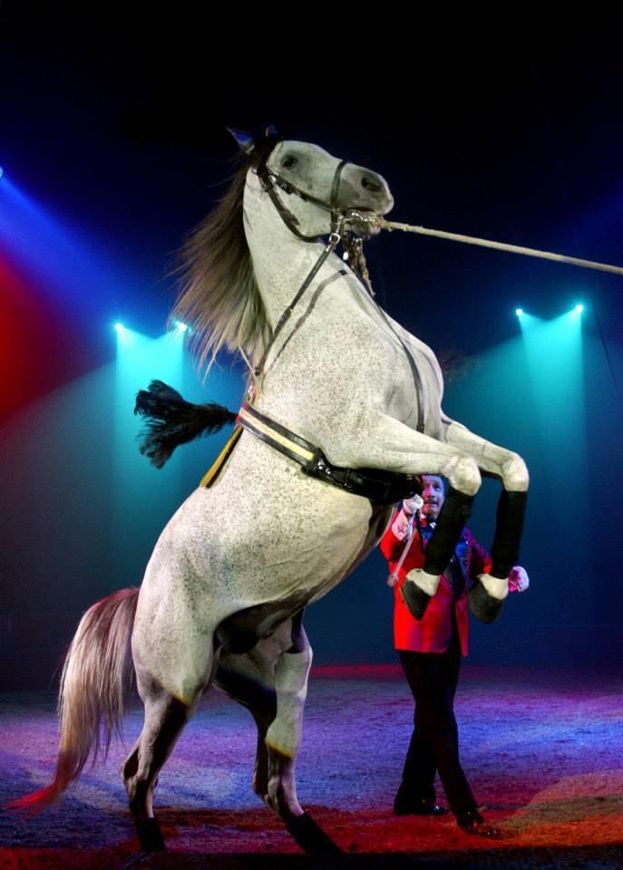 Esto hizo que varios circos replantearan cómo hacen sus espectáculos.