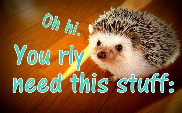 44 Super Cute Products Every Hedgehog Lover Needs