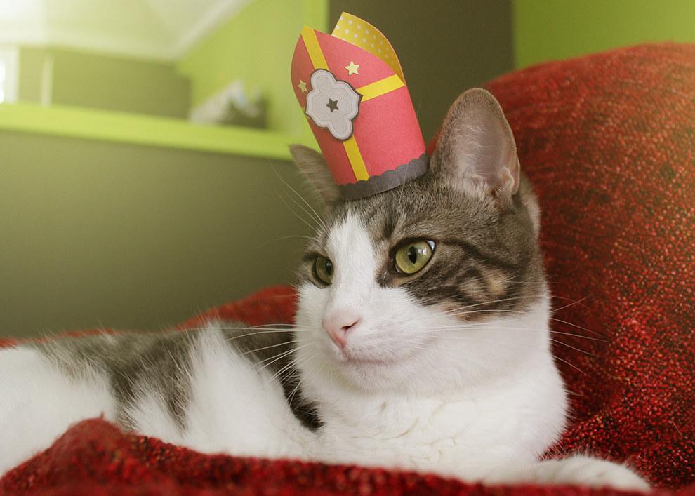 Tiny Hats On Cats Buzzfeed