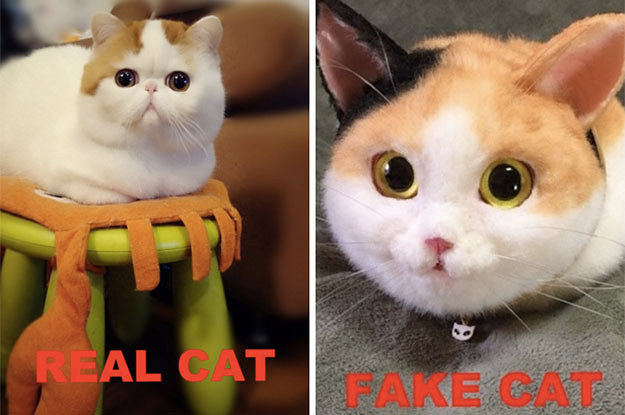 WTF Is Up With These Freakishly Realistic Cat Bags?