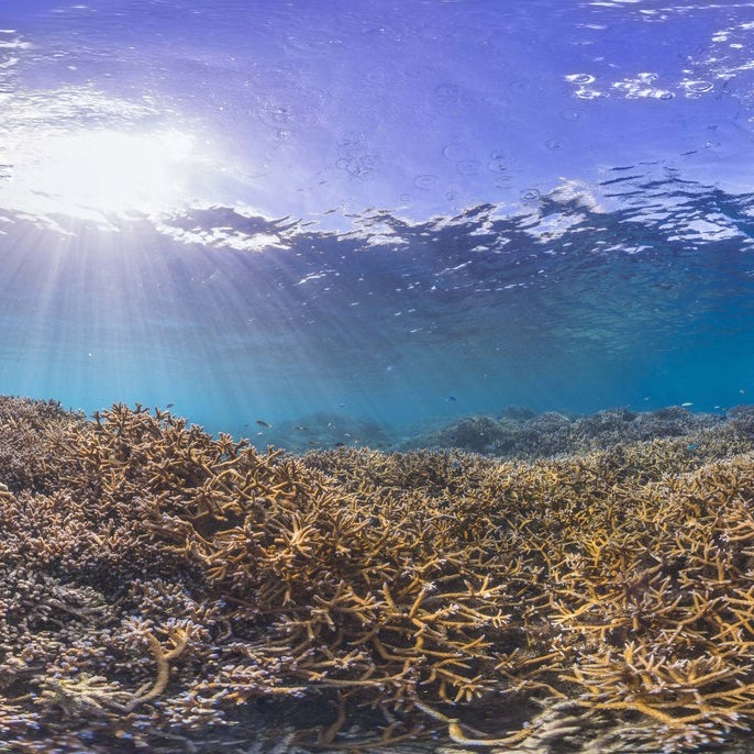 A healthy reef in American Samoa on Dec. 2014.