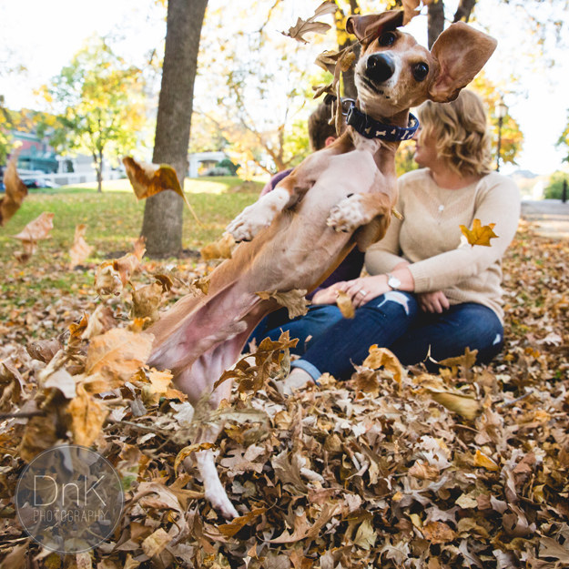 This Dog Perfectly Photobombed His Owners' Engagement Photos