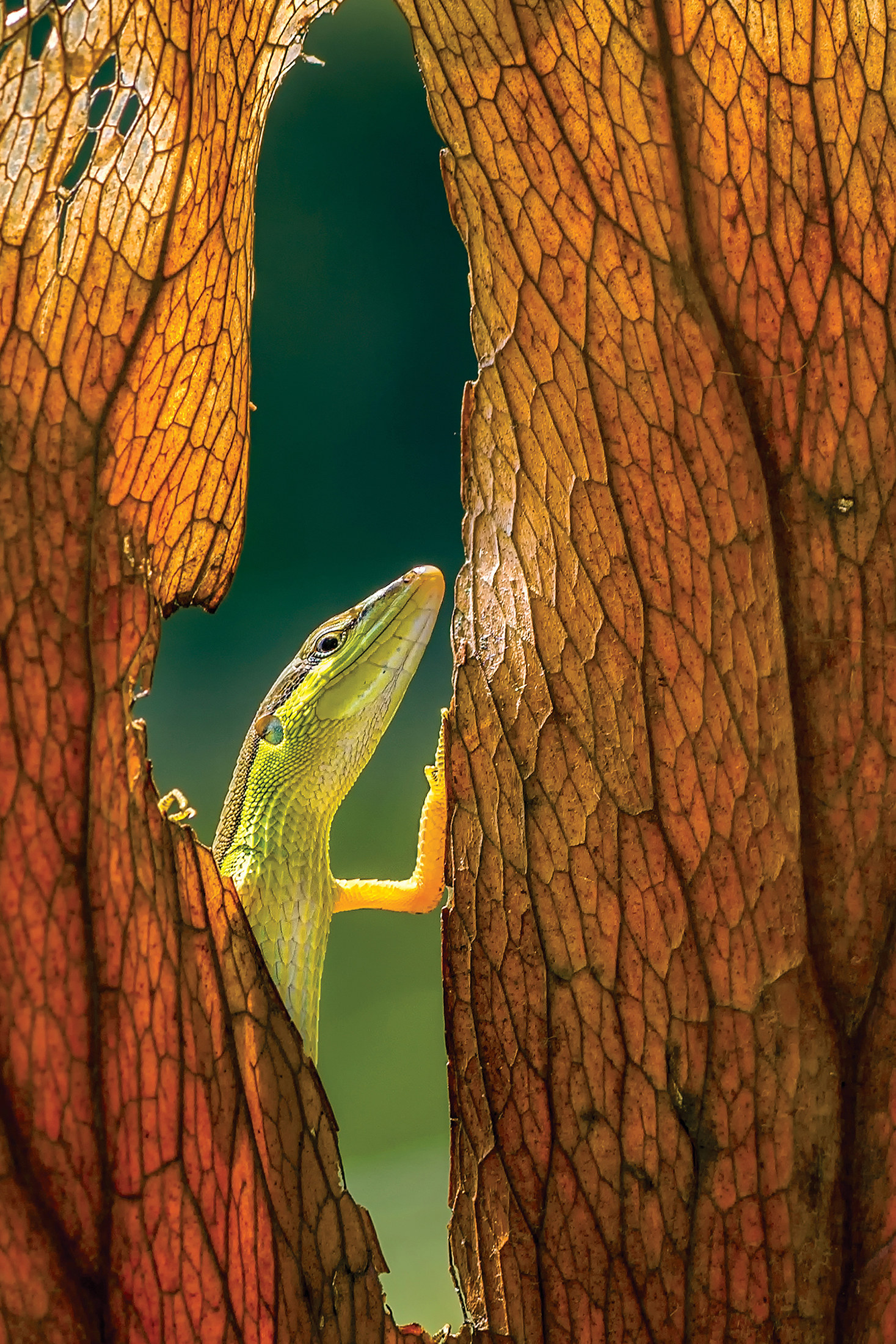 22 Nature Photos Taken In 2015 That Will Blow You Away