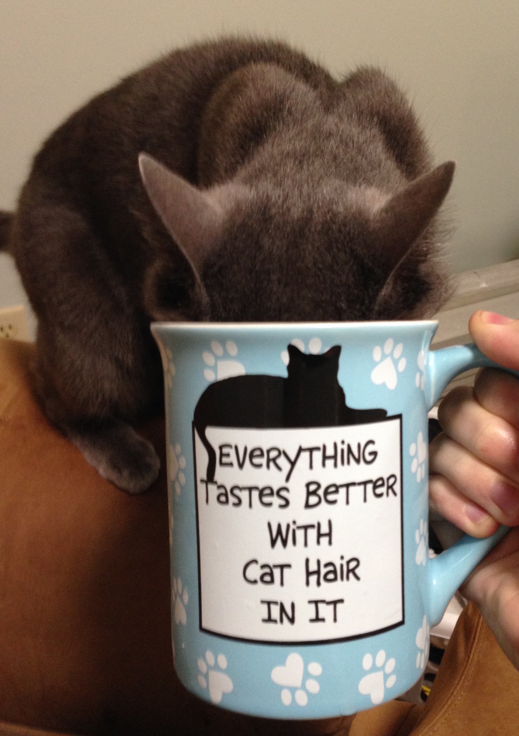 22 Things Only Cat Owners Understand About Cats