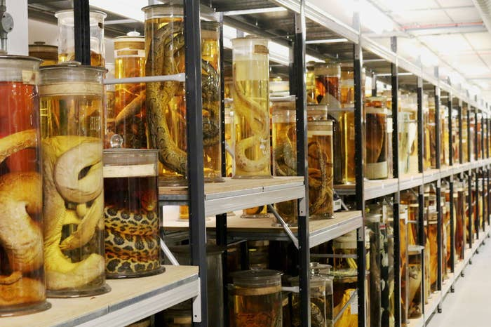 There are monkeys in jars, manta rays in tanks, and a giant squid called Archie stretches her legs down the middle of the room. There are over 80 million preserved specimens in this fully functioning research lab and you can see them all on a guided tour, if you're into that.