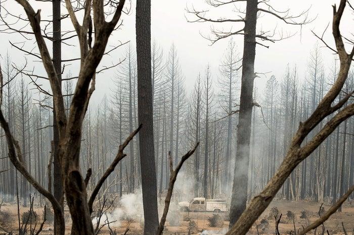 Burned trees are seen near Cobb, California on Sept. 14.