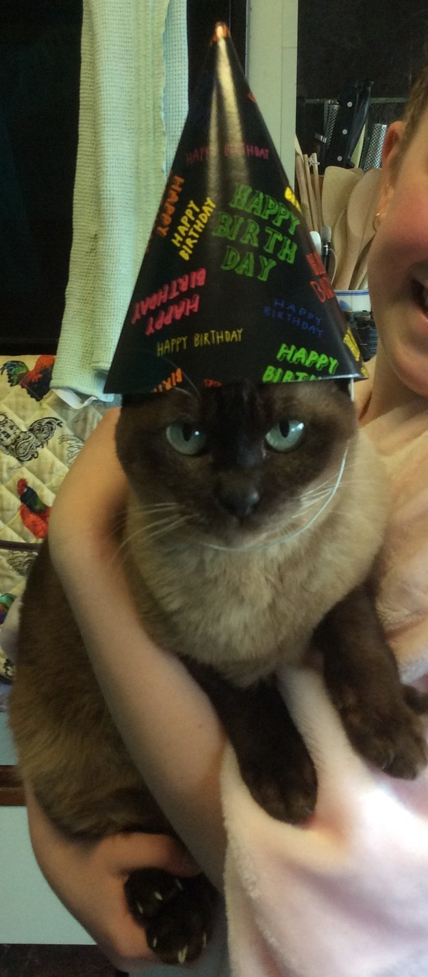 21 Cats Who Will Sway The Non-Believers