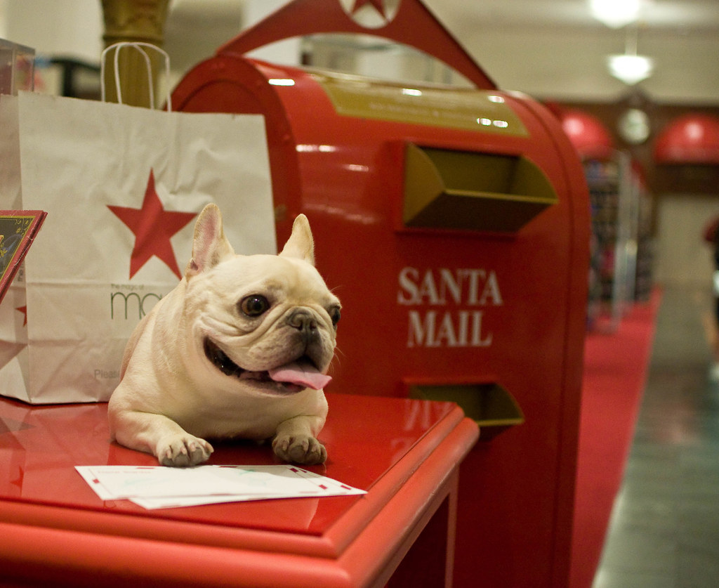 15 Puppies Who Have This Whole Holiday Thing On Lock
