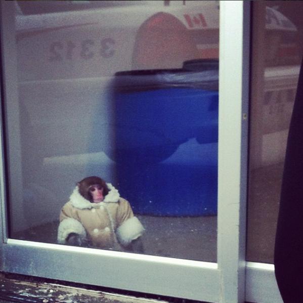 Ikea monkey got the message.