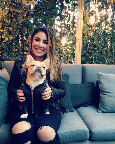 17 Times Chloe The Mini Frenchie Won Instagram In 2015