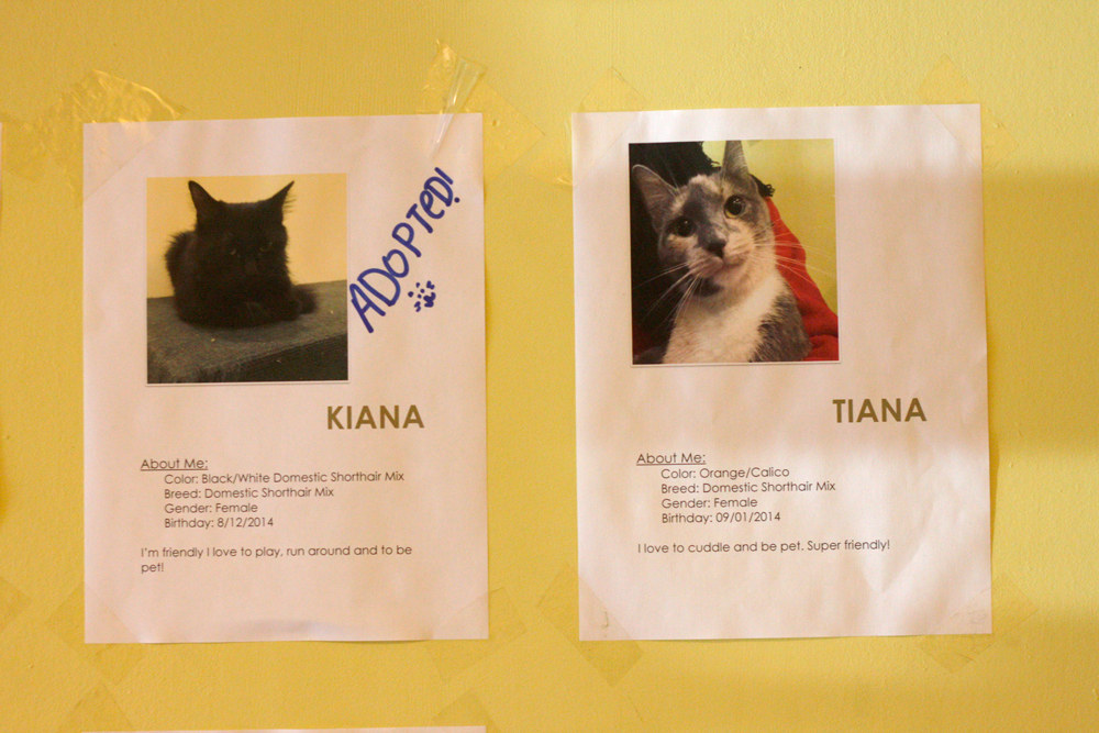Squishy Cats Buzzfeed : Toronto Finally Has A Cat Cafe And It s Even Cuter Than What You Imagine