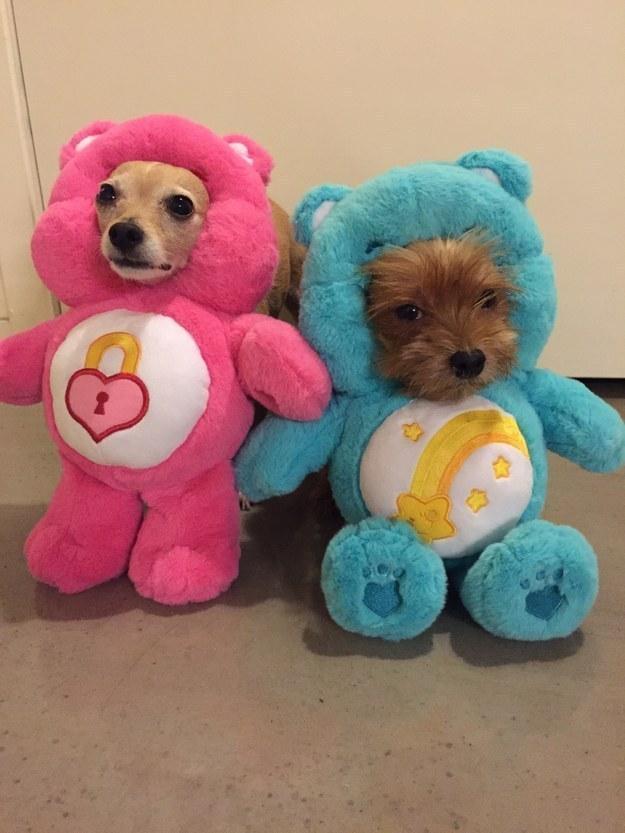 E estes dois aqui, mal-humorados por causa das fantasias de Ursinhos Carinhosos.