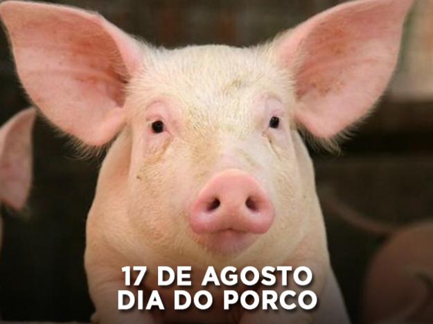 Resultado de imagem para dia do porco