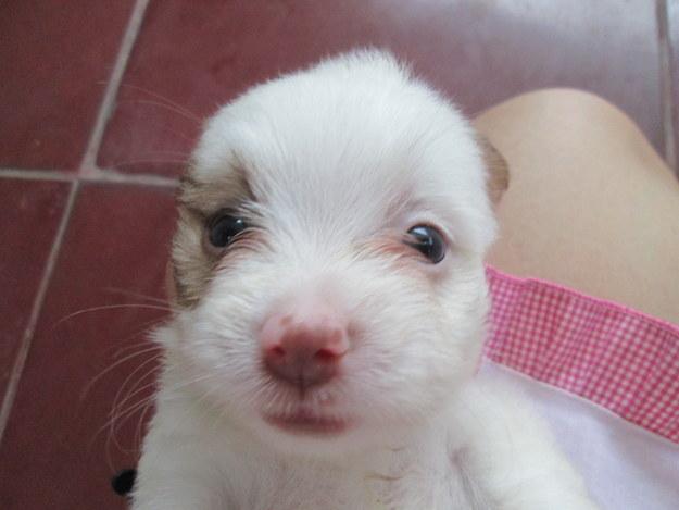Mas ela pode ser um verdadeiro presente caso você encontre um filhotinho de focinho fofo como este.