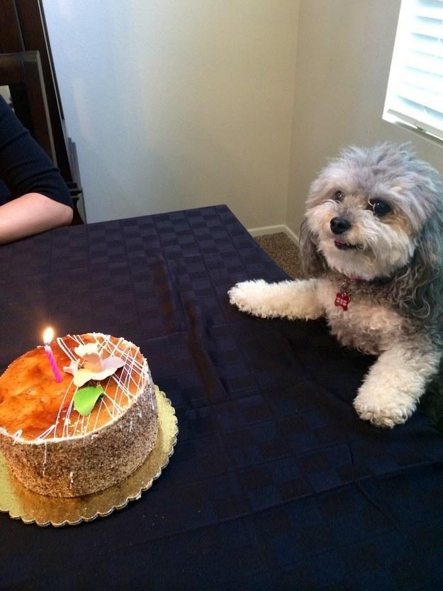 E este carinha aqui fazendo o maior esforço pra manter o controle apesar da presença do bolo.