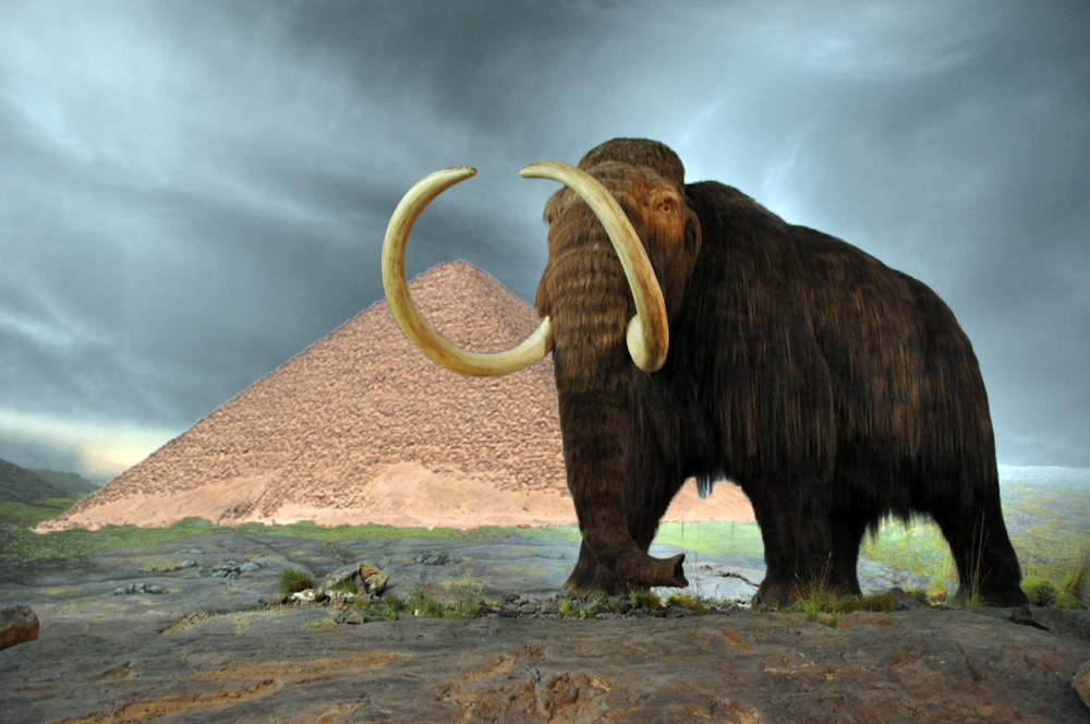 Most woolly mammoths died out 10,000 years ago, but a small population persisted on Wrangel Island in the Arctic Ocean until about 1700 BCE. By this point, the pyramids in Giza had been around for several hundred years – they were constructed in 2550 to 2490 BCE.