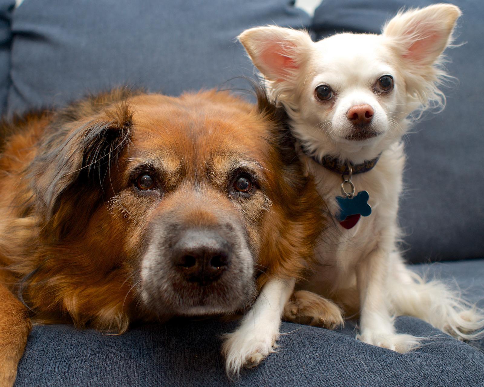 большая и маленькая собака фото телезрителей