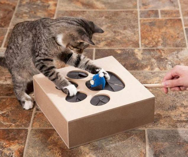 Insanely Clever Products Every Cat Owner Will Want - 29 cats lost way life