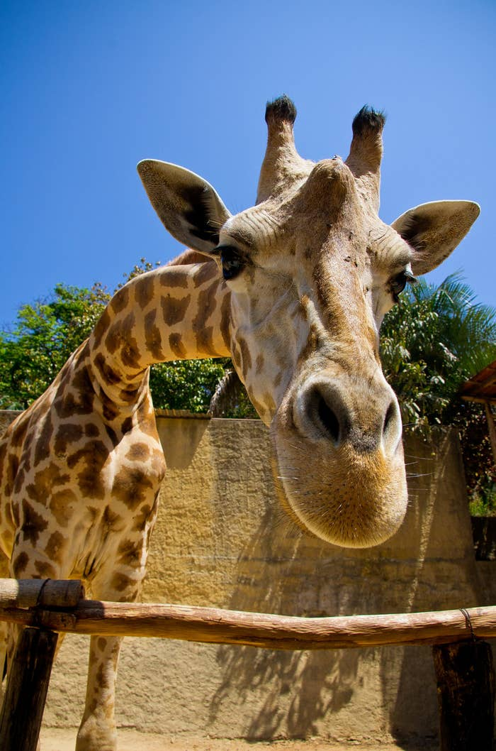 Котенок, картинки со слоником и жирафом