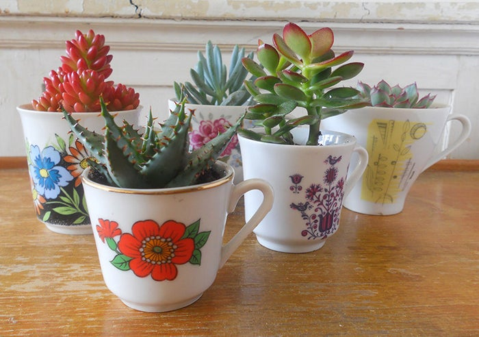 Vintage teacups make great little planters for succulents and small flowers.