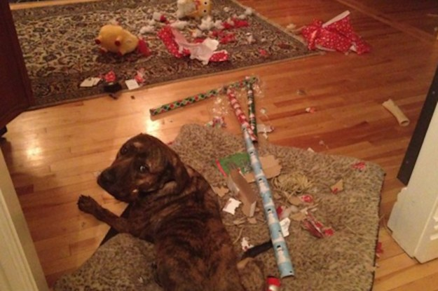 Image result for pets who ruined christmas