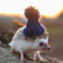 hedgehog in a tiny beanie
