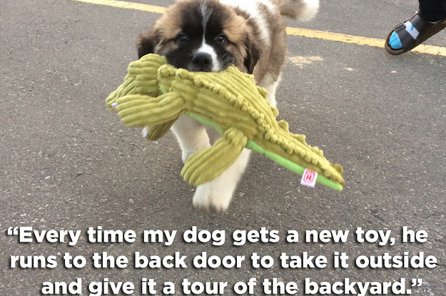 cool dog toys buzzfeed quizzes
