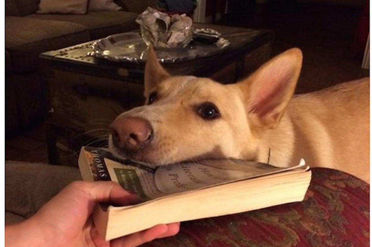 18 Pets With No Damn Respect For Books