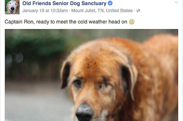 Quot Old Friends Senior Dog Sanctuary Quot Is The Best Facebook